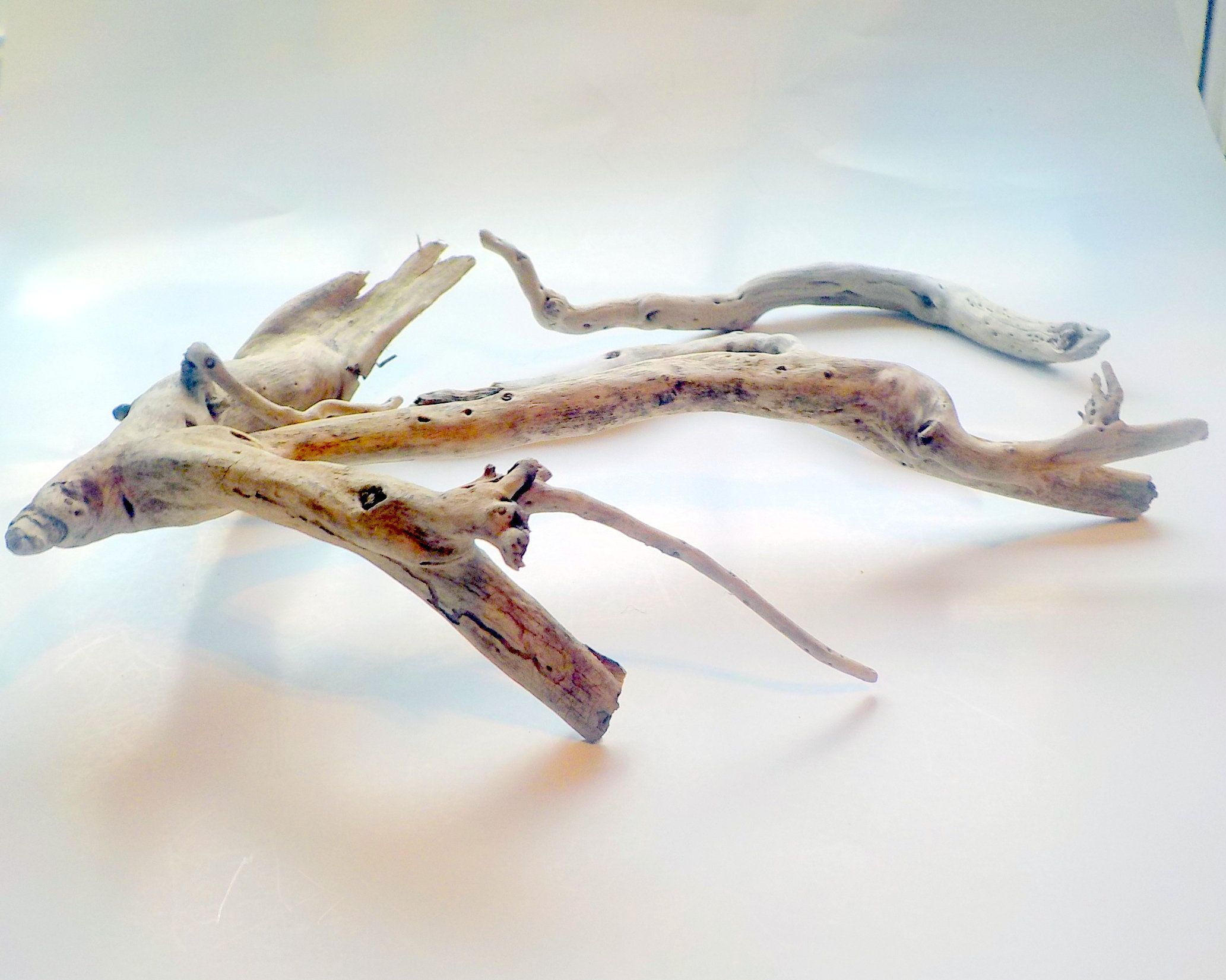 Canadian Aquarium Spider Wood Driftwood Bleached Driftwood Thee
