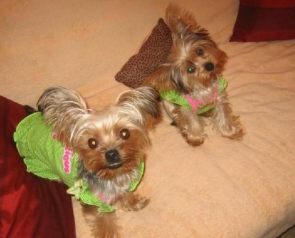 my girls... Daisy & Ginger