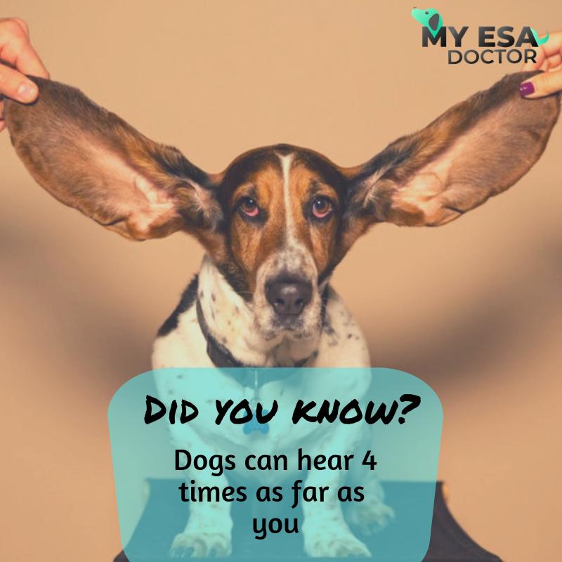 ESA Letter Online Emotional Support Animal ESA Doctor