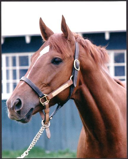Secretariat---the greatest horse in equine history.  The only horse in history to win the Kentucky Derby in under two minutes.