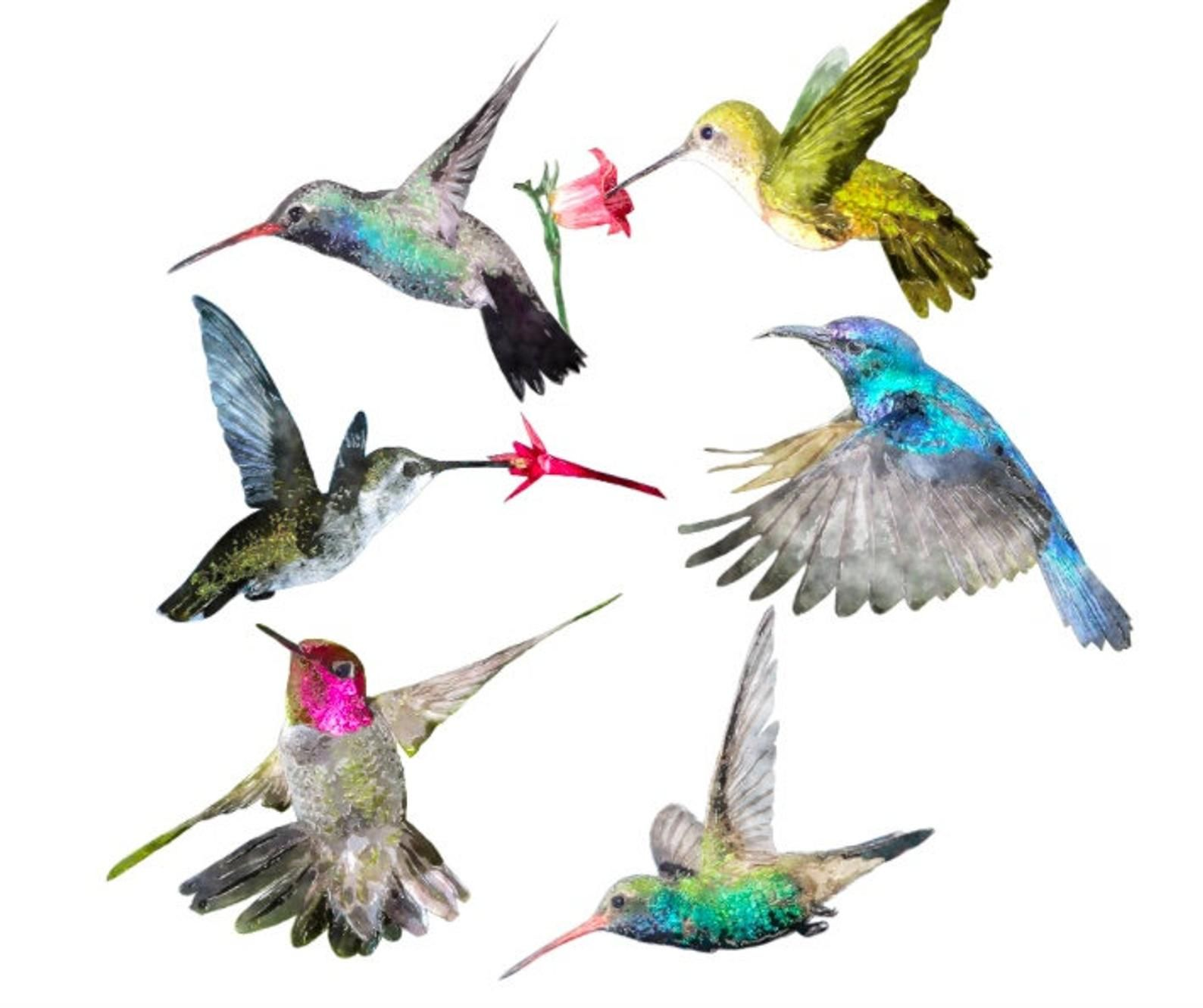 Set of 6 Watercolour colourful Hummingbird Decals