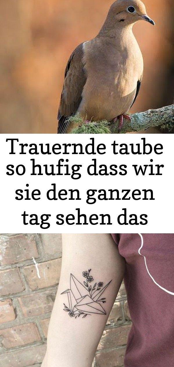 Photo of Trauernde taube so hufig dass wir sie den ganzen tag sehen das #ganzen #hufig #sehen #taube #trau 10