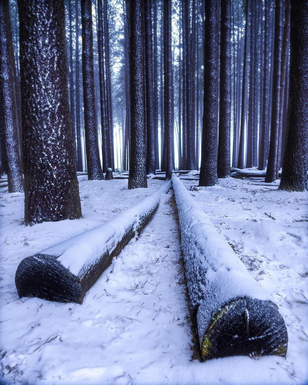 New South Wales On Instagram The Sugar Pine Walk In The Tumbarumba Region Is Proof You Don T Need A Magical Wardrobe To In 2020 New South Wales Narnia Winter Forest