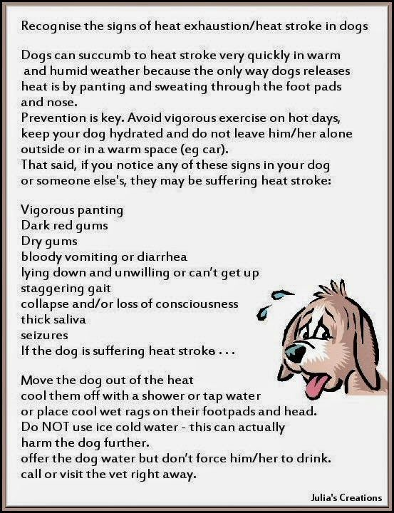 Recognise The Signs Of Heat Exhaustion In Dogs With Images