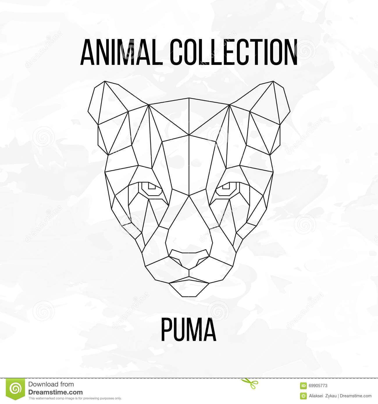 ausmalbilder tiere puma  aiquruguay