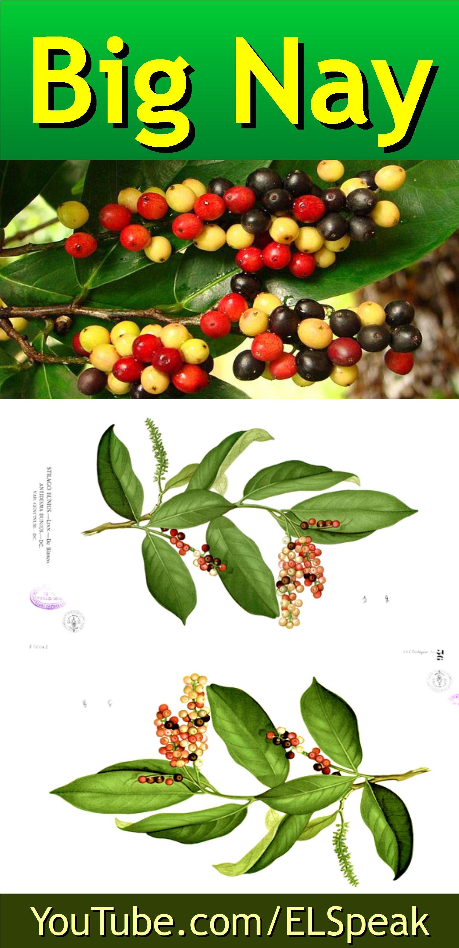 Big Nay Fruits Name In English Fruit List Fruit Names
