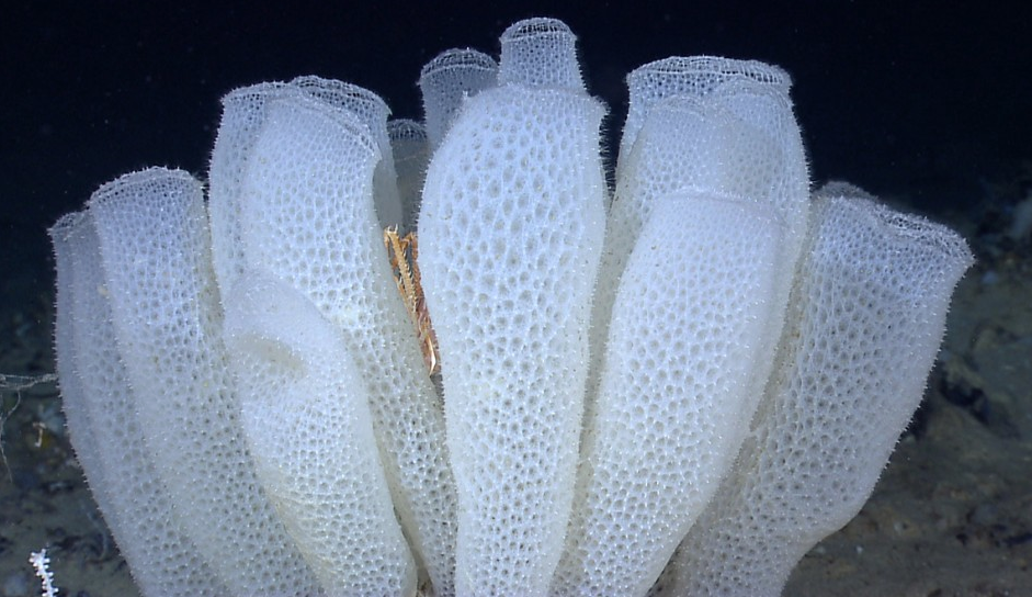 Glass Sponges are a type of sponge that tend to live in
