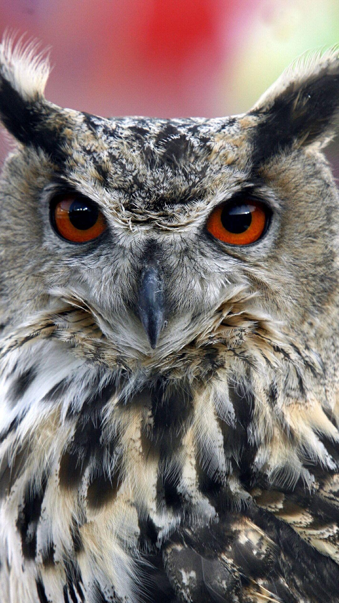 Free iPhone 6 Wallpapers Pet birds, Animal wallpaper, Owl