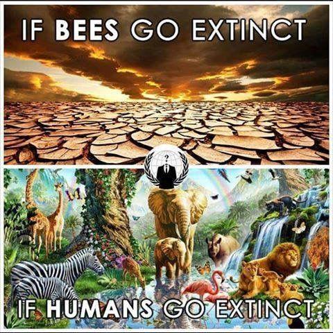 Pin By Vamanos Vegan On Honey Bees Bee Global Warming Climate
