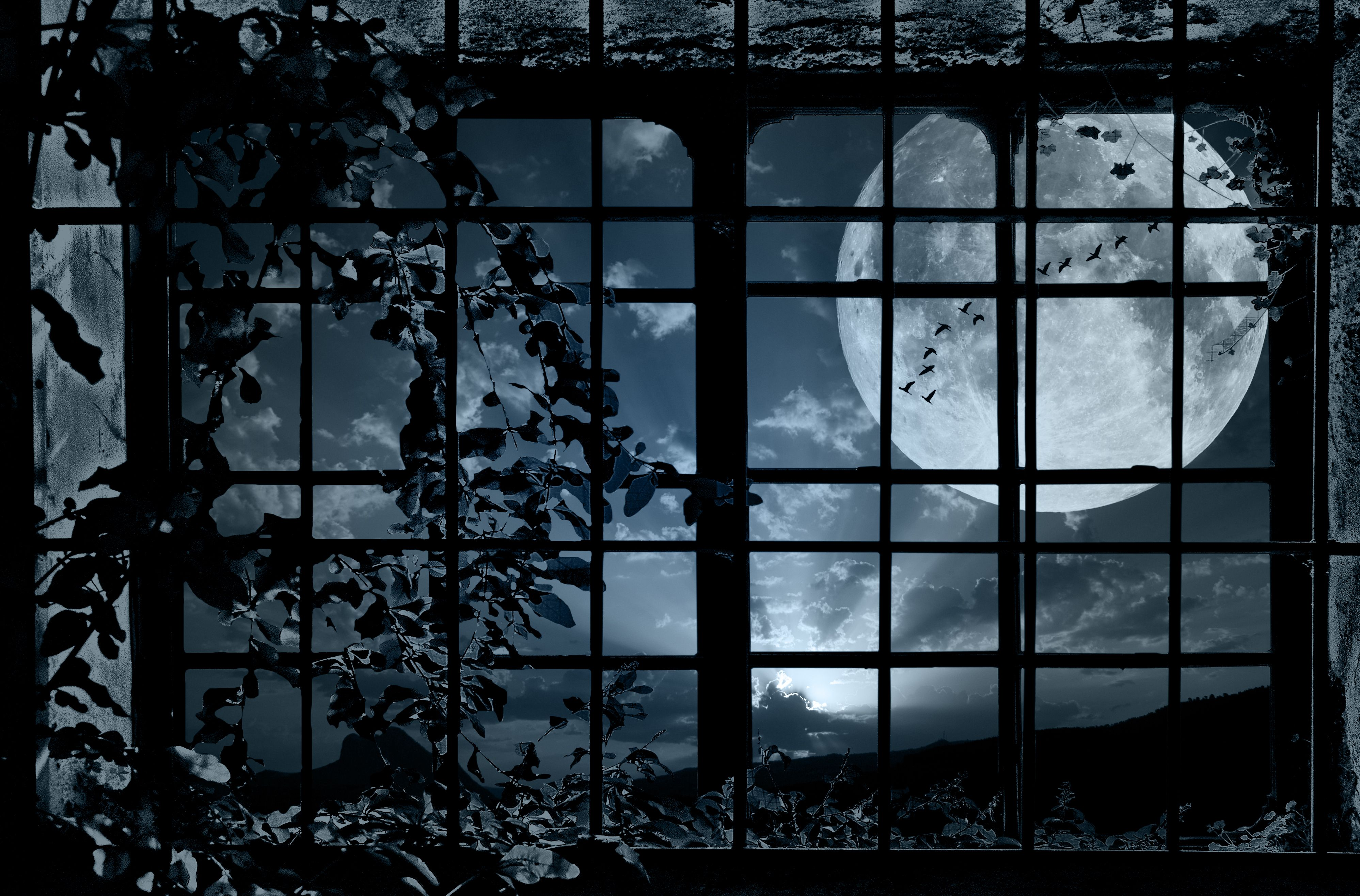 Through Who Painted The Moon Black Ao