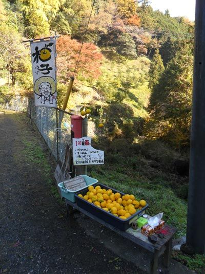 Fresh fruit to buy in the countryside.  No staff, you just put your money in a little box!  http://www.cheapojapan.com/chichibu-hiking-autumn-colours-report/  #japan #food