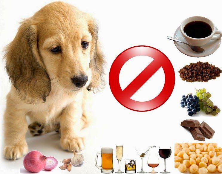 10 Alimentos Proibidos Para Caes Disso Voce Sabia Caes