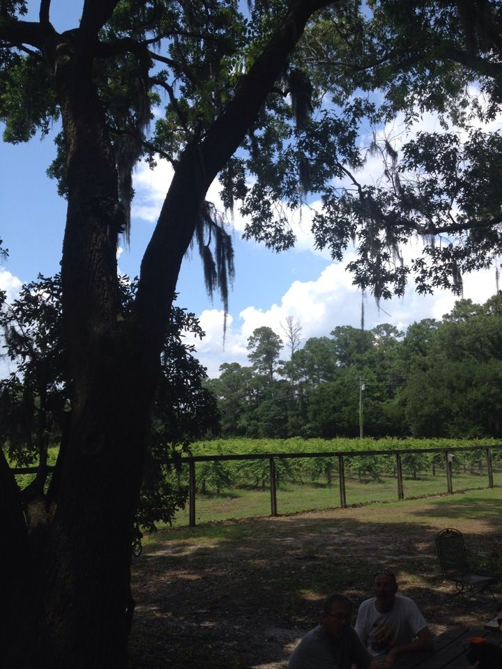 Irvin House Vineyards Vineyard Outdoor Places To Visit