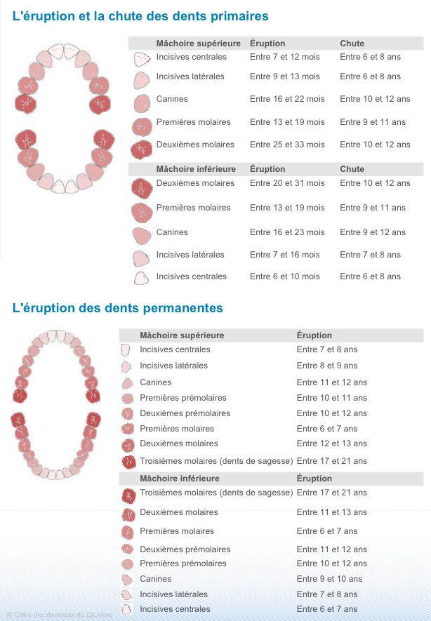 Diagramme d\'érupion et chute normale des dents primaires ...