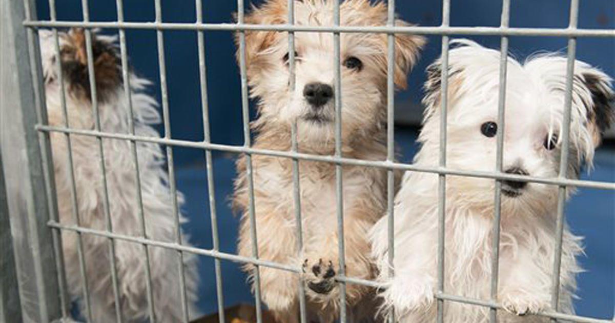 17++ Lied animal shelter las vegas images