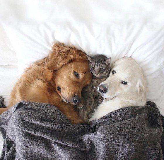 情報 抱來抱去的毛絨絨貓狗家族 幸福寵物交流區 哈啦板 巴哈姆特 可愛いワンちゃん 子猫 可愛い犬