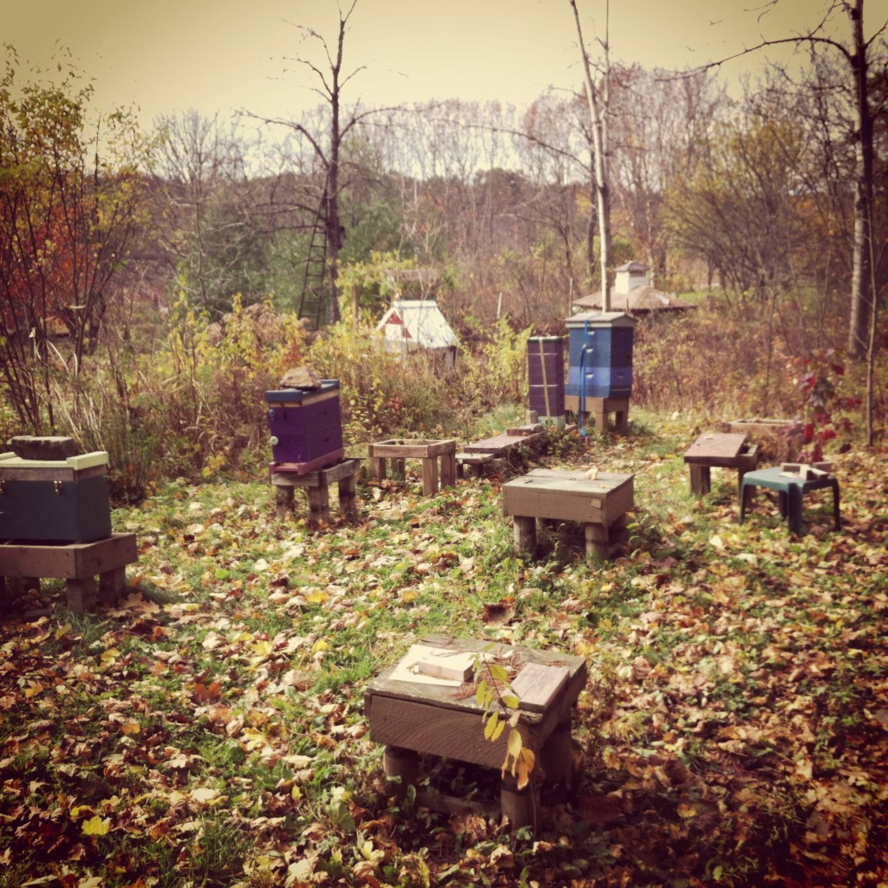 Overland Honey bee yard | bee charmer | Pinterest | Bees, Yards and ...