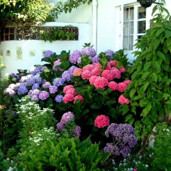 Garten Tipps Hortensien Aequivalere Hortensienpflanze Garten Pflanzen Garten