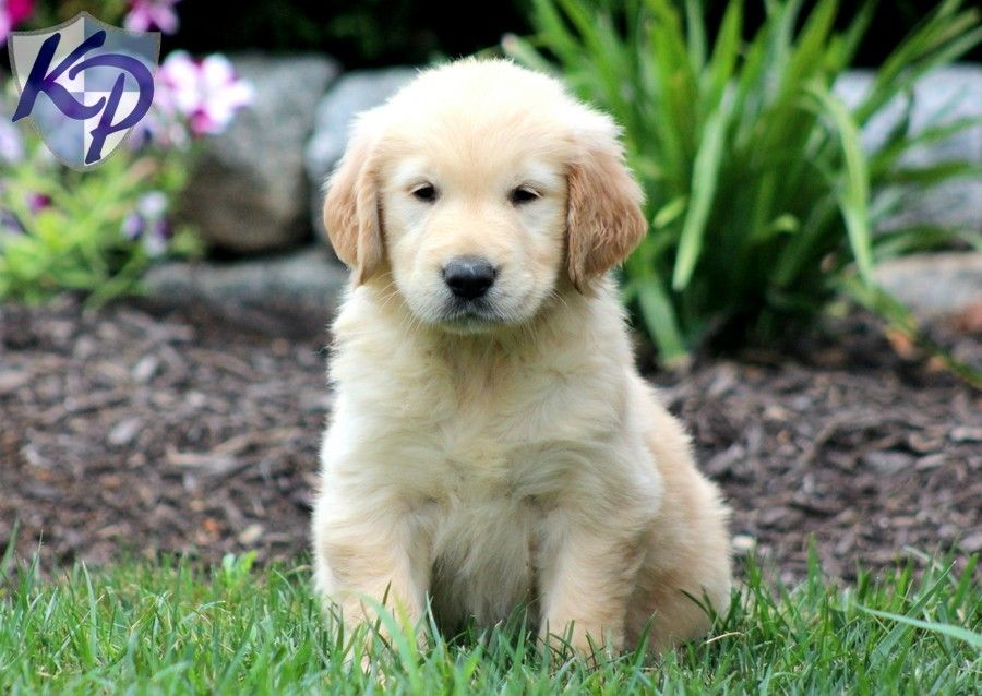 Puppy Finder Find Buy A Dog Today By Using Our Petfinder Cute