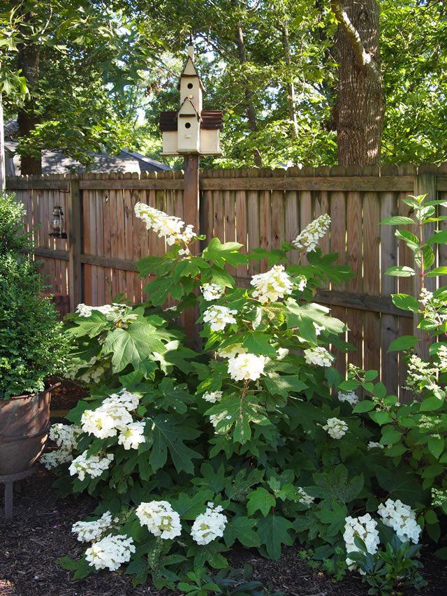 Perfect Summer Weather Hydrangea Landscaping Garden