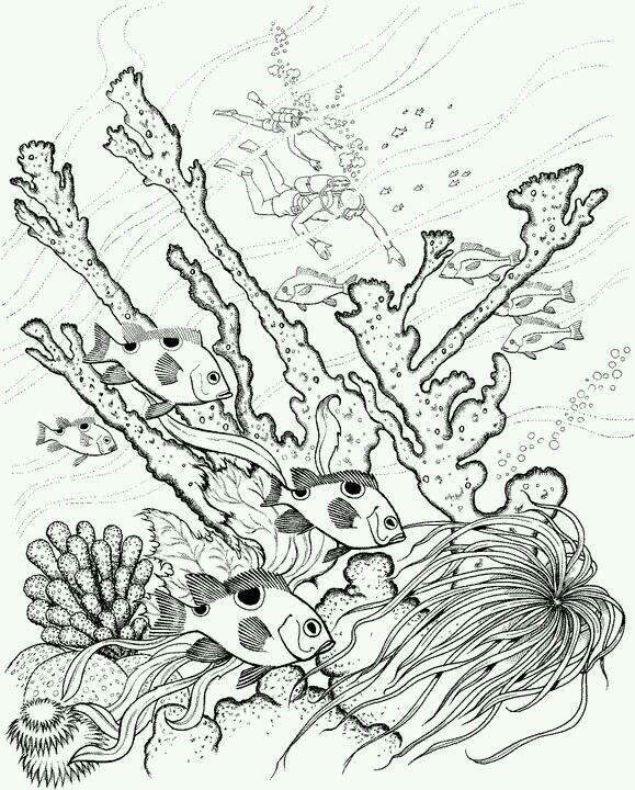 Картинка (с изображениями) | Рисунки для раскрашивания ...