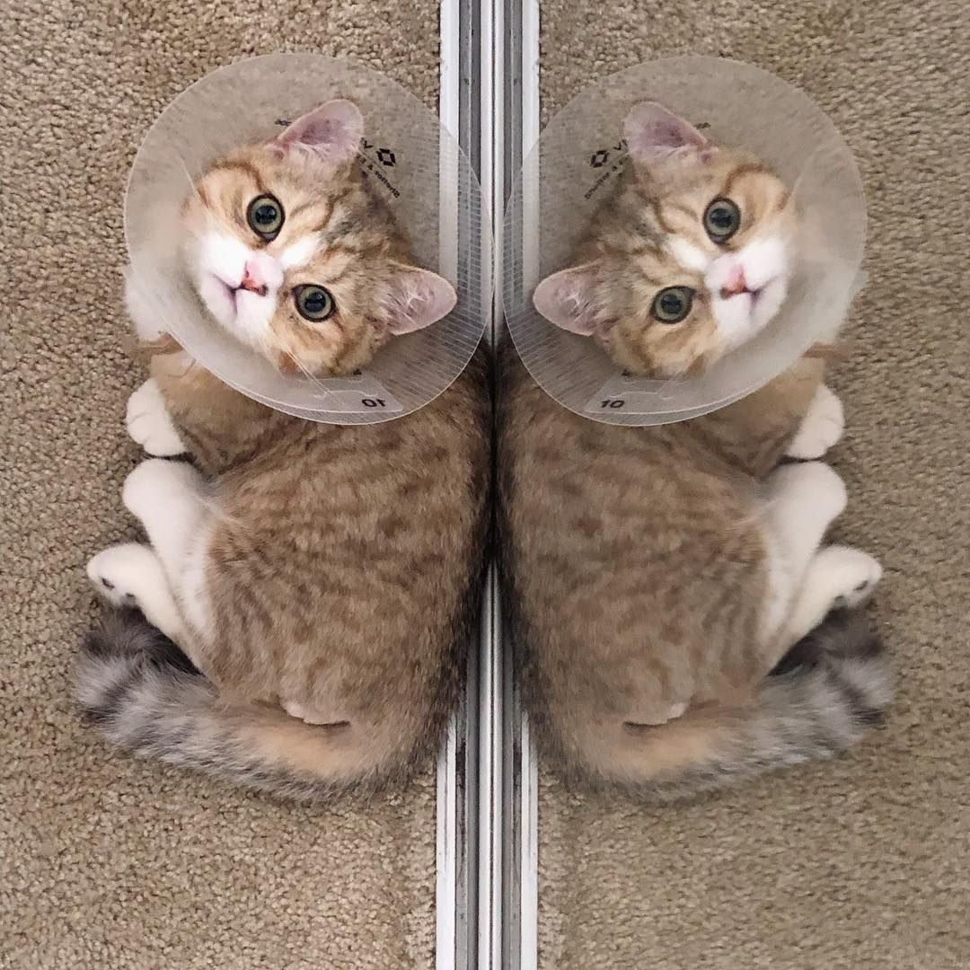 Pin On Cute Cats And Kittens Image Baby Kitty