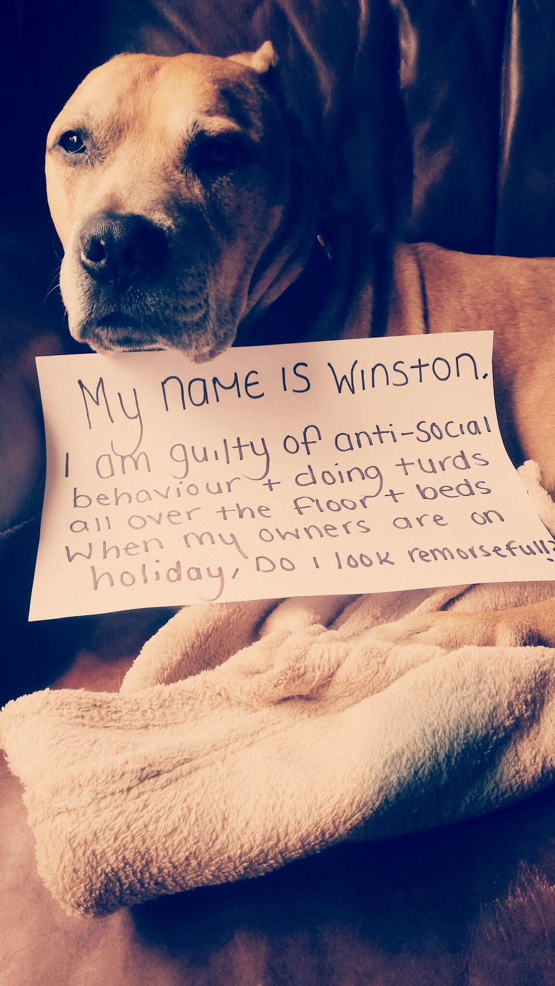 My Name Is Winston I Am Guilty Of Anti Social Behavior
