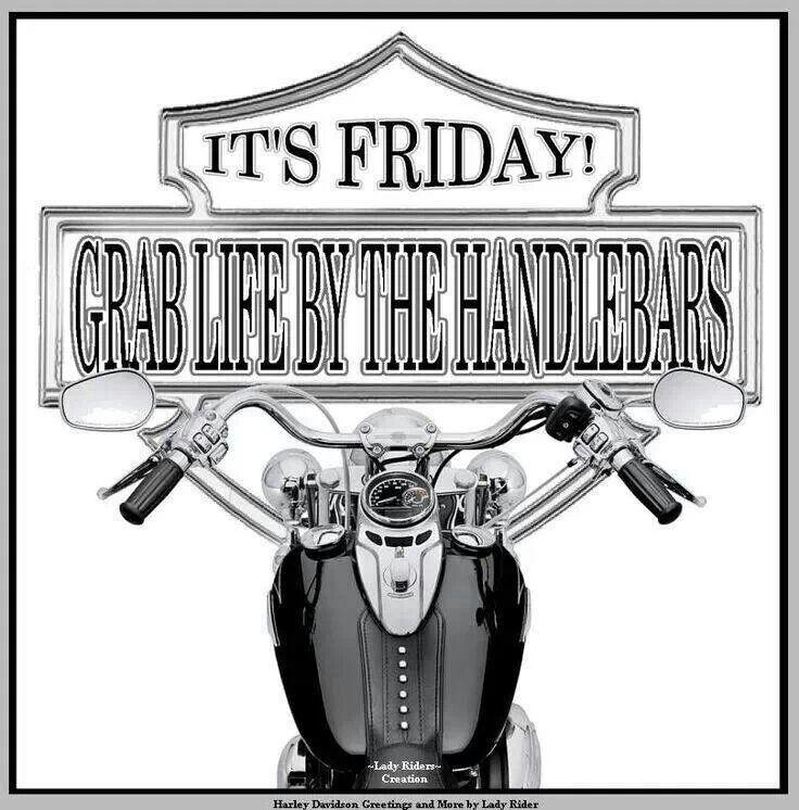 Grab Life By The Handlebars Harley Davidson Motorcycles Black Harley Davidson Harley Davidson Roadster