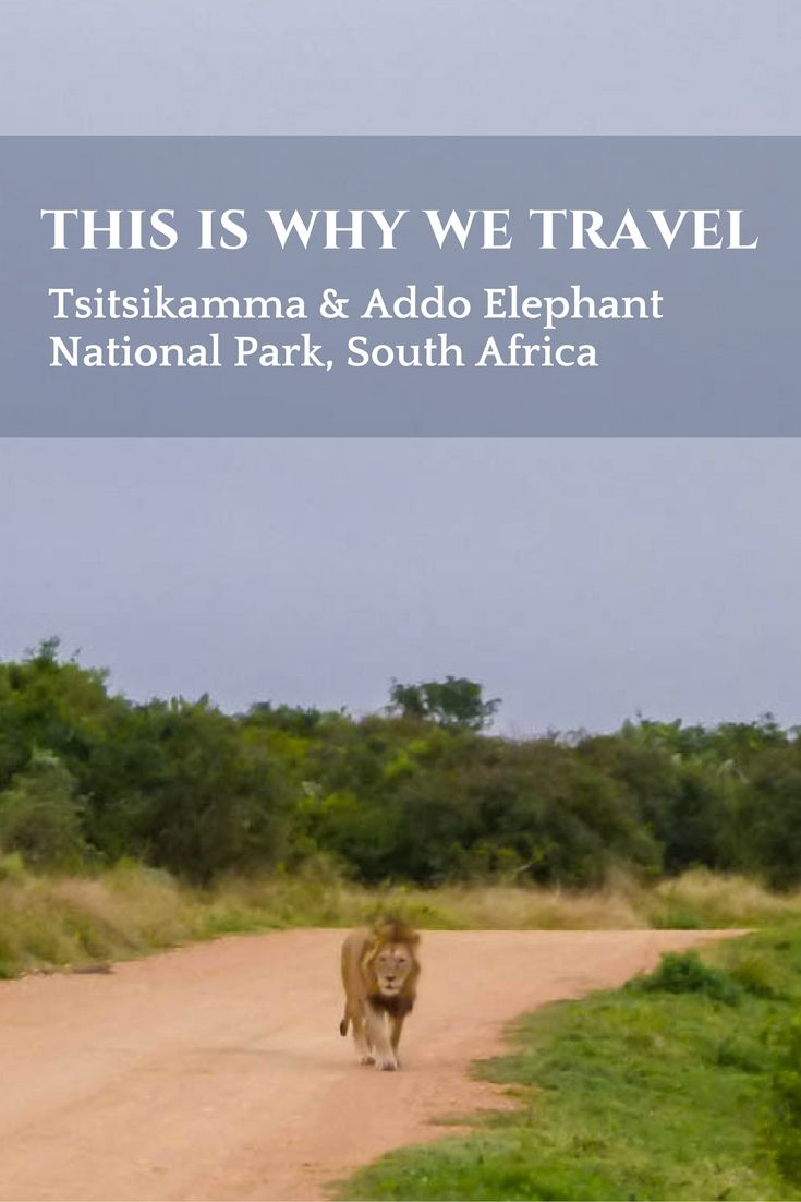 Tsitsikamma & Addo Elephant National Park, South Africa - This Is Why We Travel