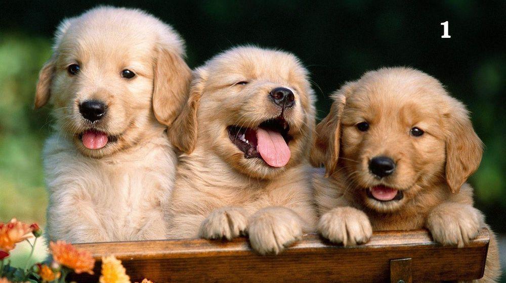 Graham And Brown 57218 Darcy Wallpaper Pearl Hunde Fotos Haustiere Kaufen Und Haustiere
