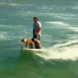 Photo of Schau wie cool diese Surfhunde sind!