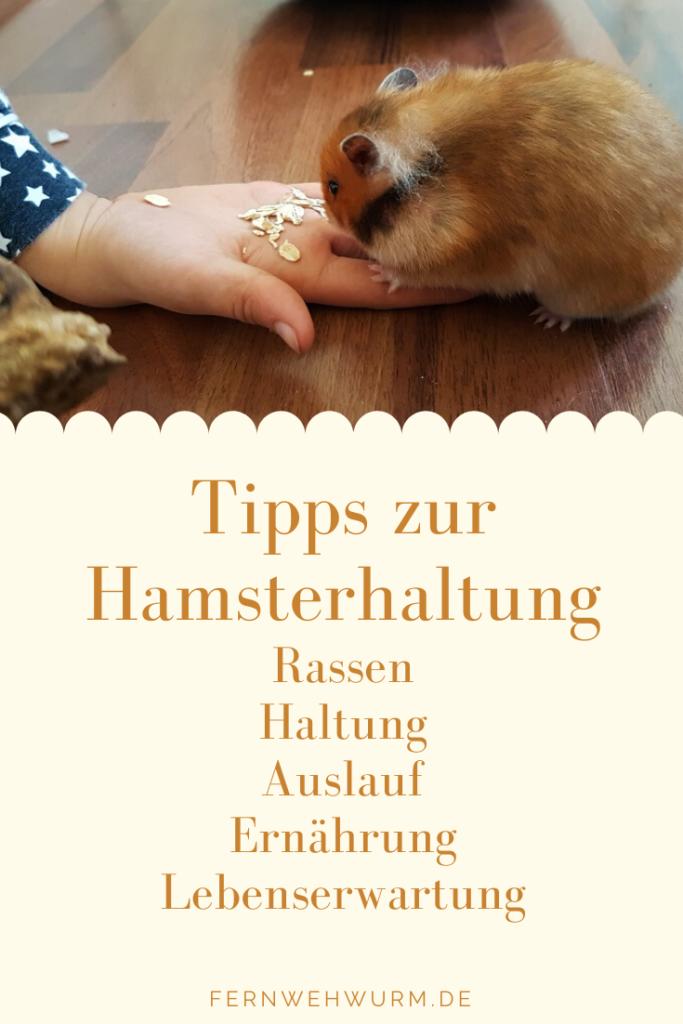 Tipps Zur Hamsterhaltung Hamster Und Kinder In 2020 Hamster Haustiere Fur Kinder Goldhamster