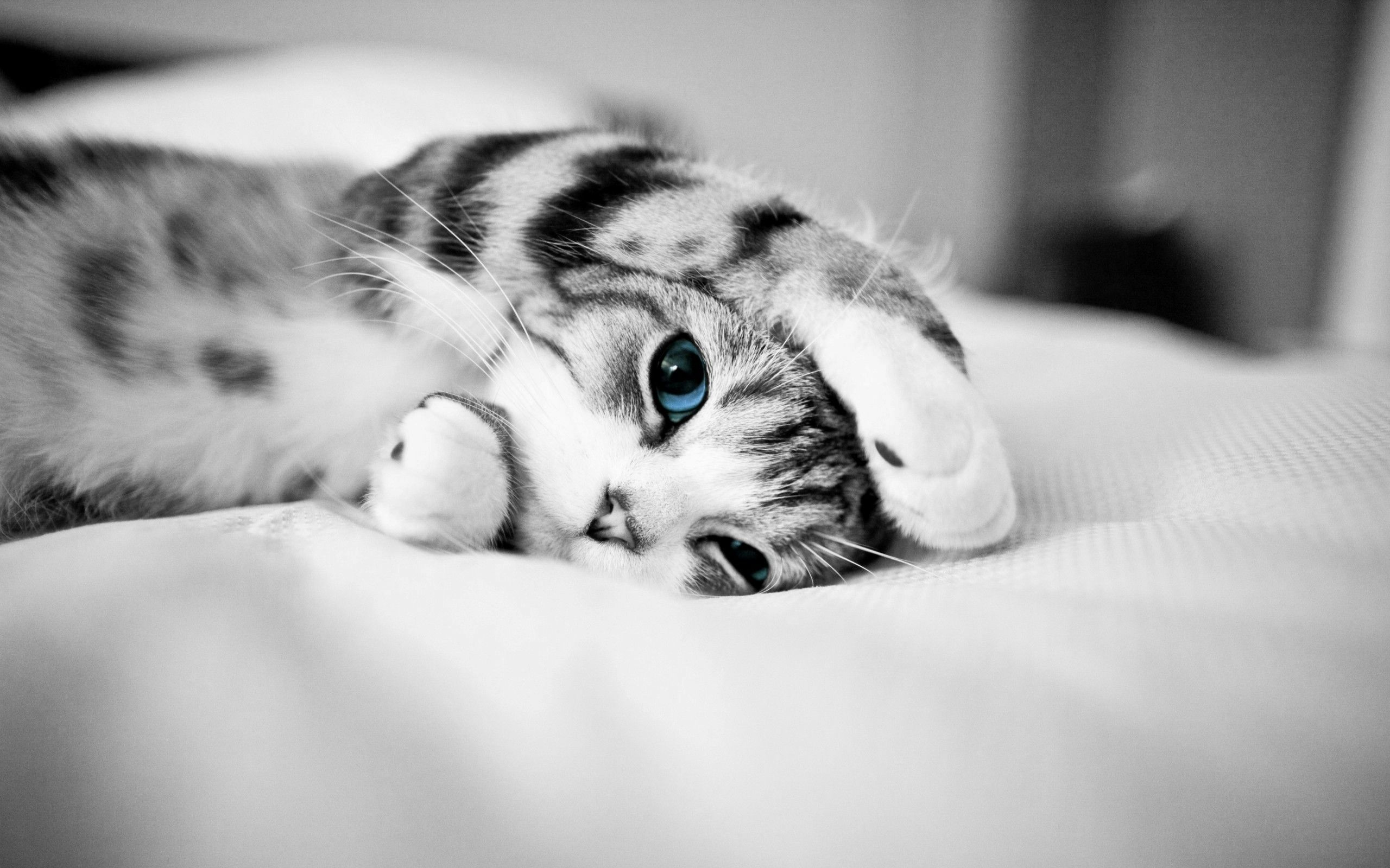 Discover Ideas About Sleepy Kitty Animal Eyes Wallpapers