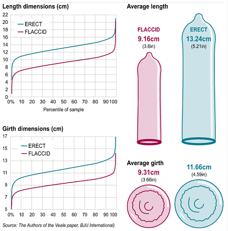 is penis average how large the