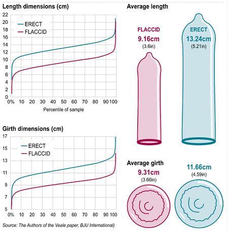 Average Penis Length In The Uk