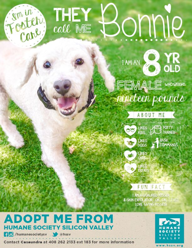 Adoptable Miniature Poodle Mix Bonnie 119790 Humane Society Silicon Valley Humane Society Foster Dog Shelter Dogs
