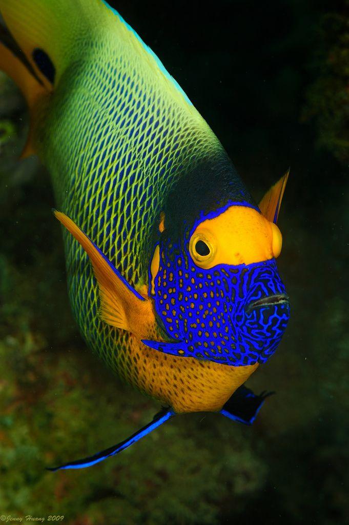 Acuario pinterest pez marino peces de for Peces de acuario marino