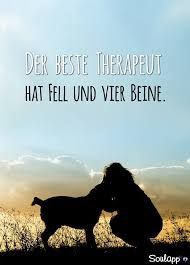 Ja, das sind Hunde, Welpen & kleine, süße Babykatzen - Kathrin Meiners - #Babykatzen #das #Hunde #ja #Kathrin #Kleine #Meiners #sind #süße #Welpen