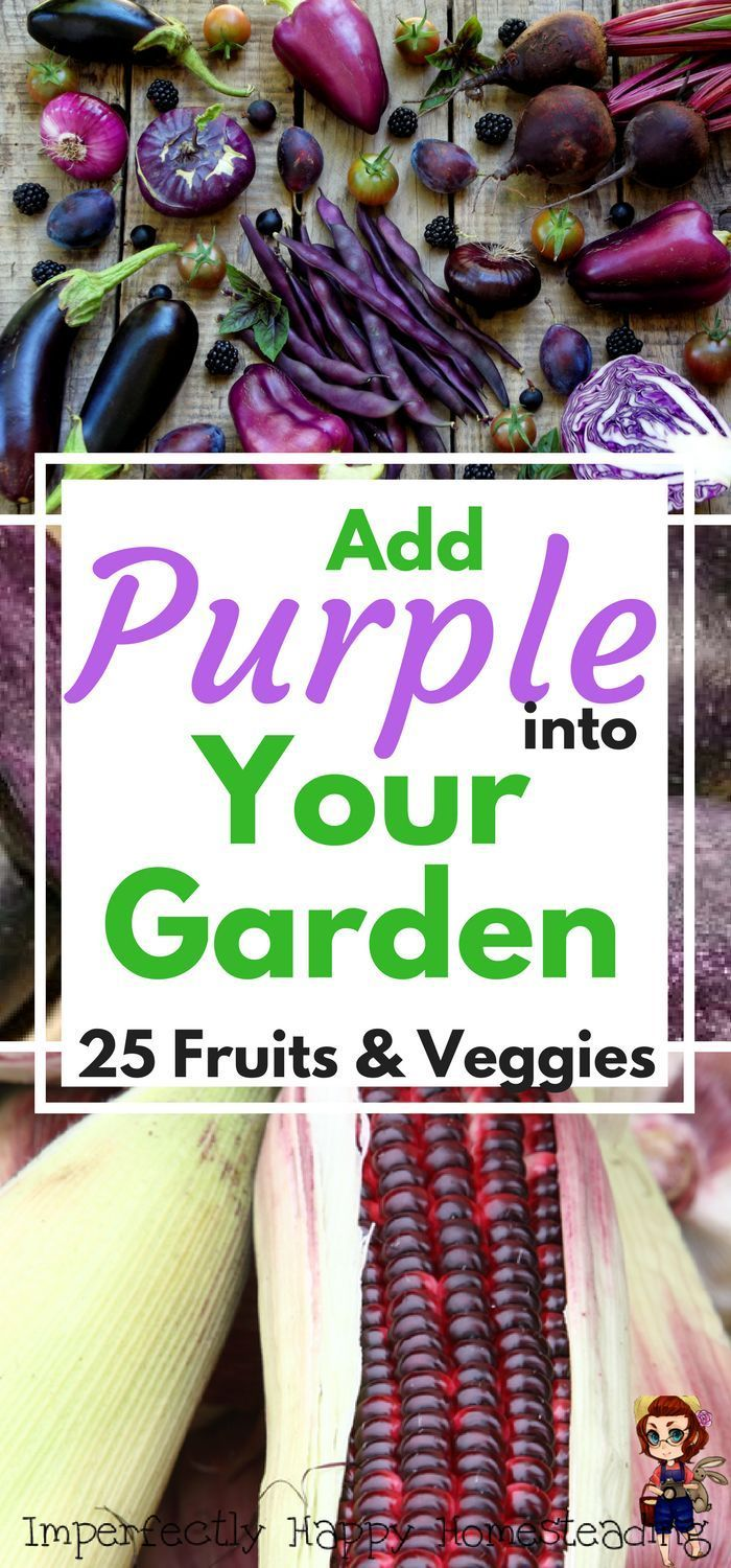 add some purple into your vegetable garden with these 25 fruits