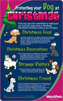 Top Tips From Vets4pets On Protecting Your Dog From Christmas