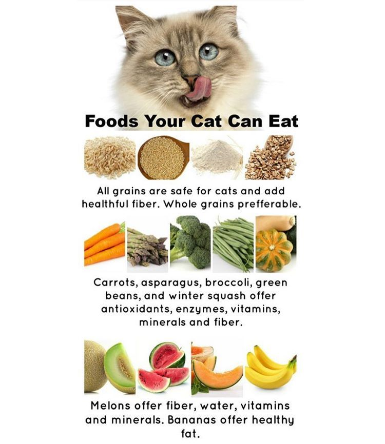 Plant Based Foods Your Cat Can Eat Cats Food Animals Plant Based Recipes Dog Food Recipes