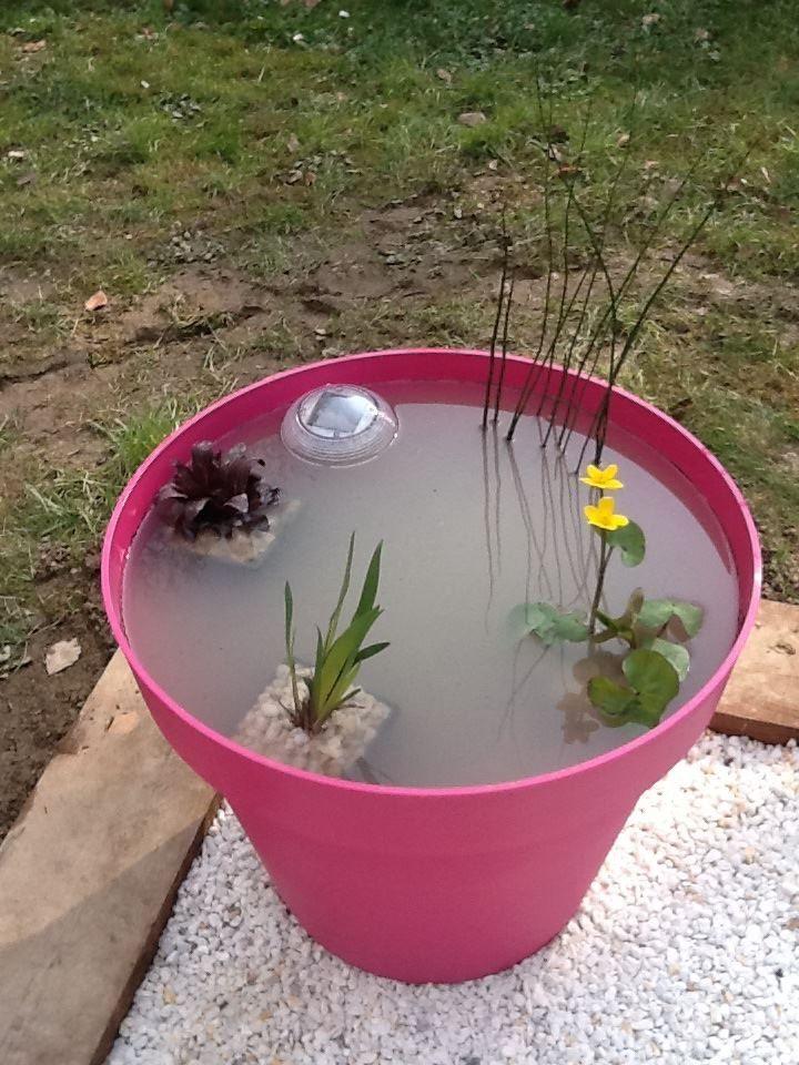 Un mini jardin aquatique un grand pot de fleur aux couleurs tendances quelques petites - Pot de couleur pour jardin ...
