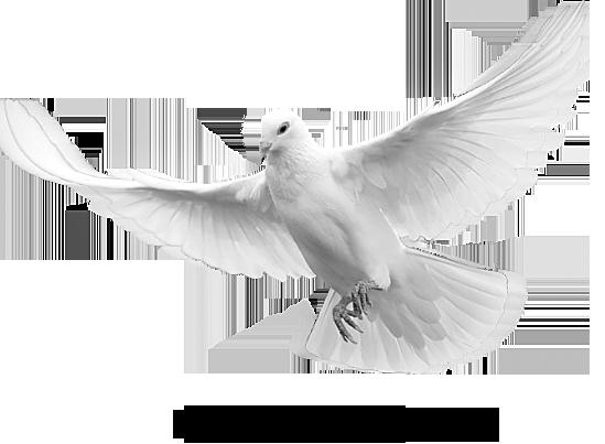 رزمنده سایبری عشق است بر آسمان پریدن Dove Images Black And Grey Tattoos Holy Spirit Dove