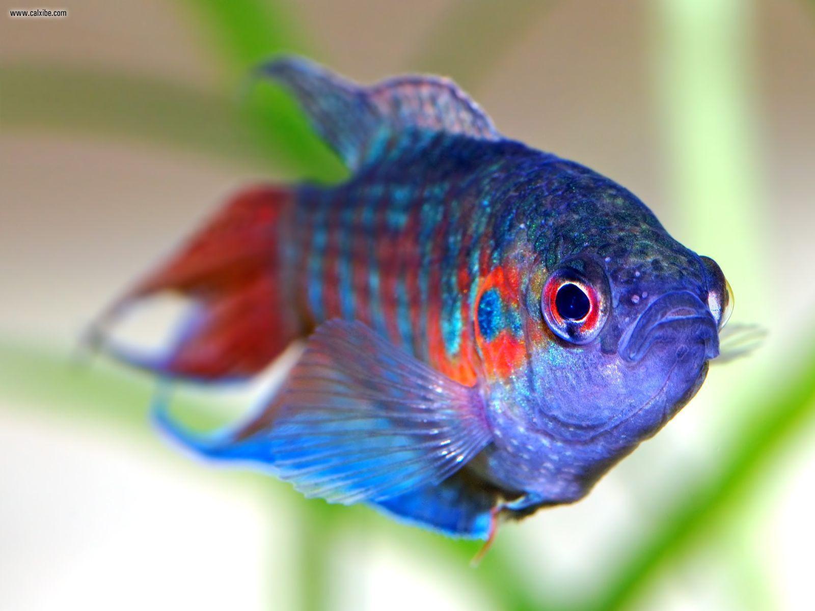 fish tropical poisson - photo #15