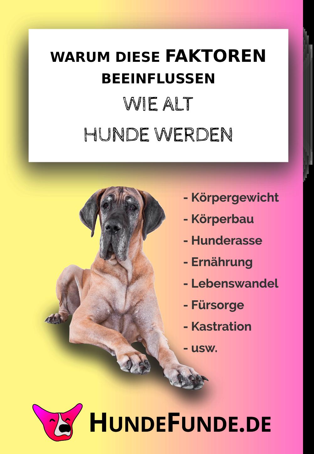 Pin Auf Rund Um Den Hund