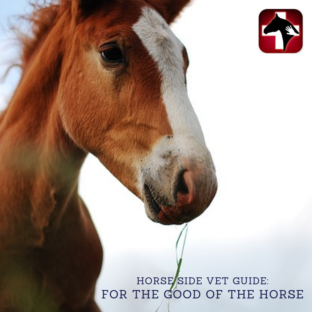 Our Horse Side Vet Guide App Has A Plethora Of Information At Your Fingertips Whenever And Where Ever You Need It Horses Equine Veterinarian Equine Nutrition