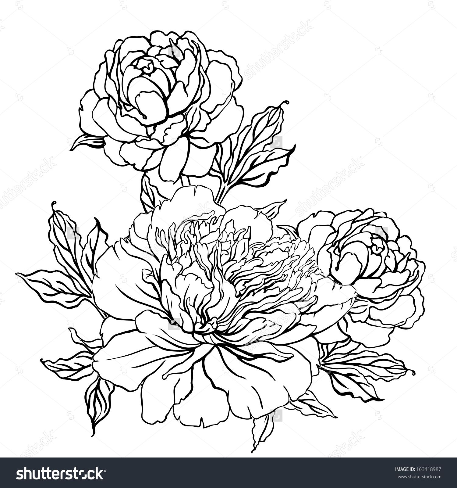 Peony Vintage Hand Drawing Background With Flowers