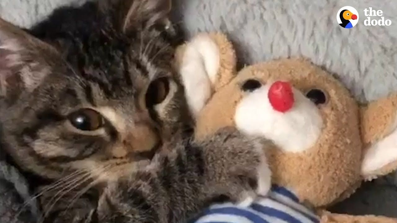 Kitten Has The Cutest Bedtime Routine The Dodo Baby Animal Videos Sleeping Kitten Kitten Cuddle