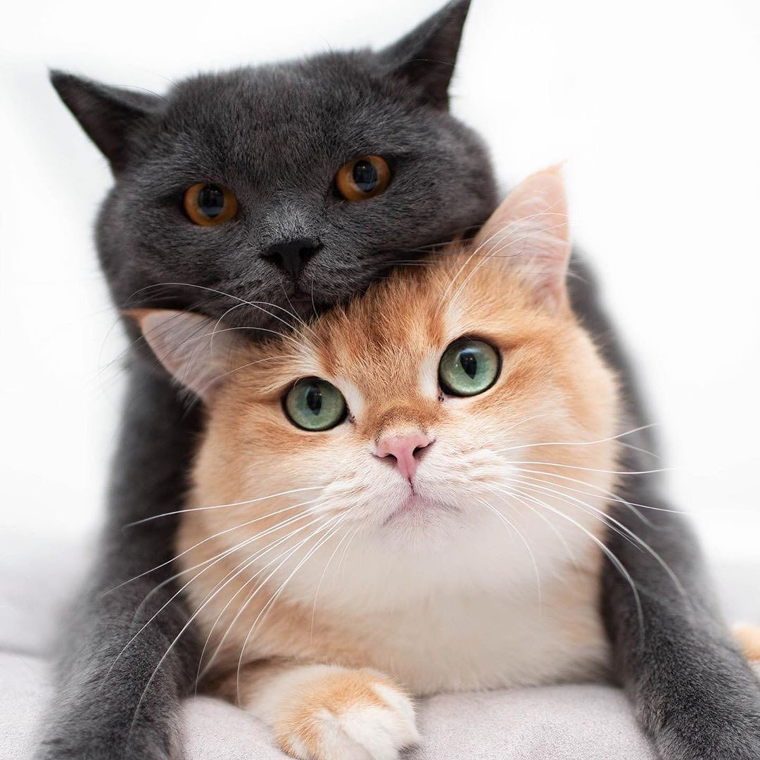 Try Not To Laugh Funny Animals Videos 2020 Funny Animal Videos Animals Funny Cats Funny Animals