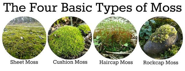 Diy Wilderness Garden Boxes Types Of Moss Garden Types